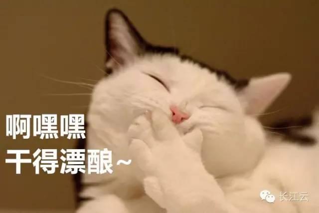 中国的水下动物水猫