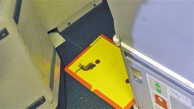 外籍入境航班配餐间现活鼠 检疫员布200个粘鼠板