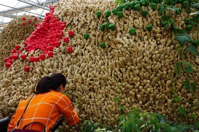 武汉将举办首届农业嘉年华 果蔬做景观玩转都市农业