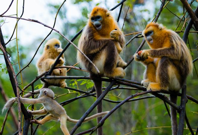 中国已建立自然保护区2740个02