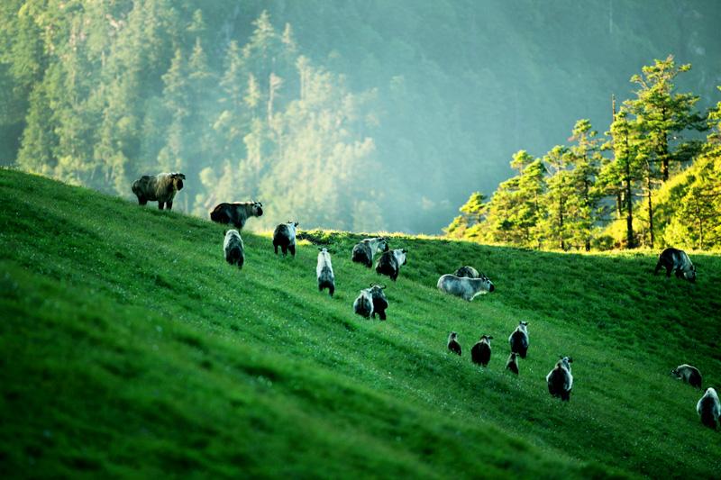 中国已建立自然保护区2740个 高于世界平均水