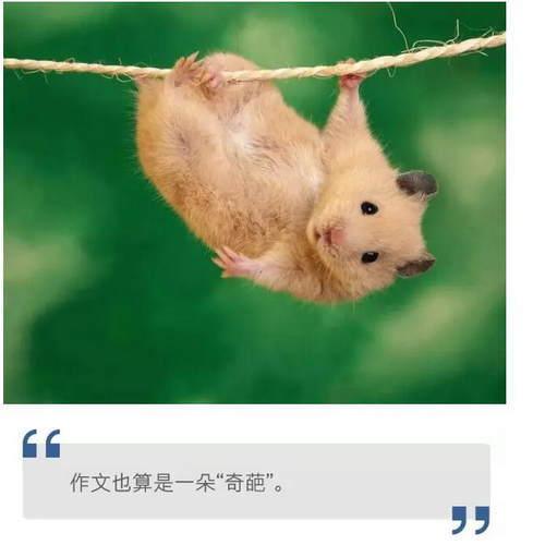 简易霸气动物图画