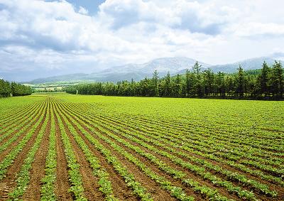 到2020年全国耕地须保有18.65亿亩以上