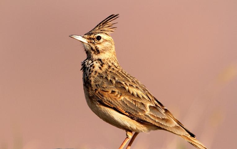 新野生动物保护法规范放生行为:必须为当地物种且不