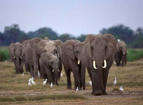 新野生动物保护法规范放生行为:必须为当地物种且不得