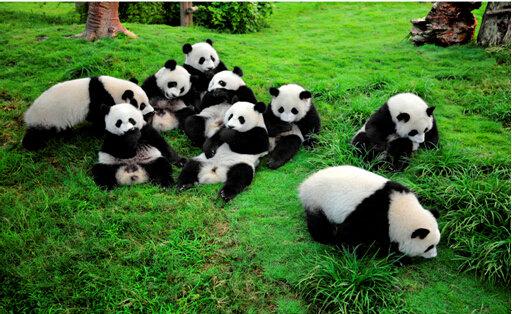 世界野生动物保护组织全球总干事马可•兰博
