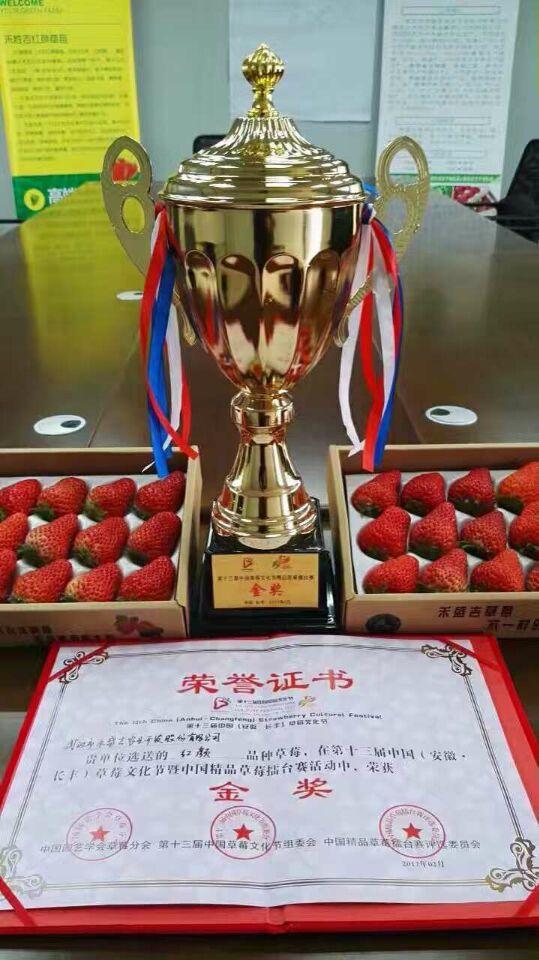 草莓草莓节上千种精品重点打擂武汉黄陂区成全国龙湖镇有哪个高中图片