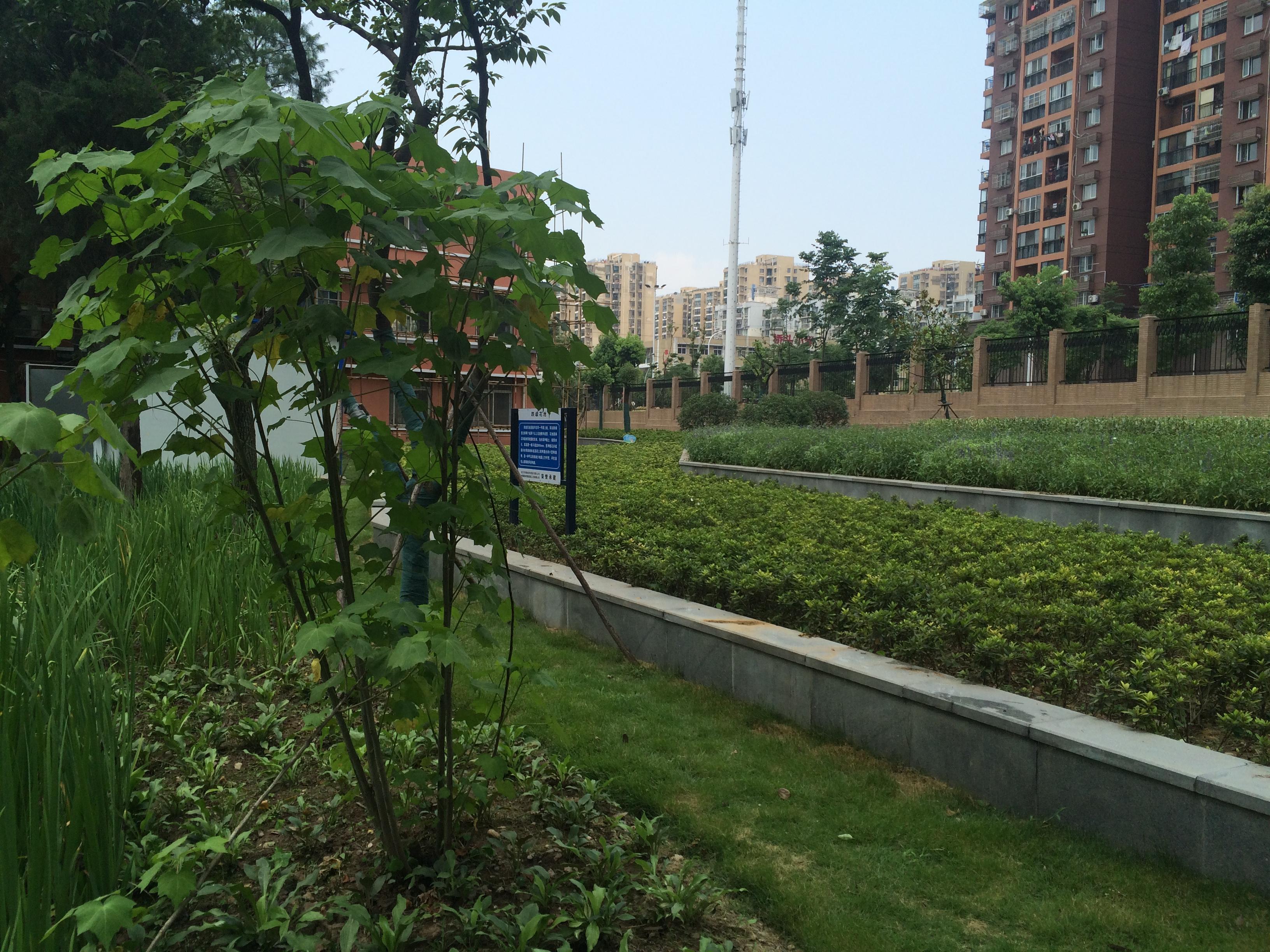 雨水花园-以绿为纲重塑城市 里子 武汉海绵城市建设驶入快车道图片