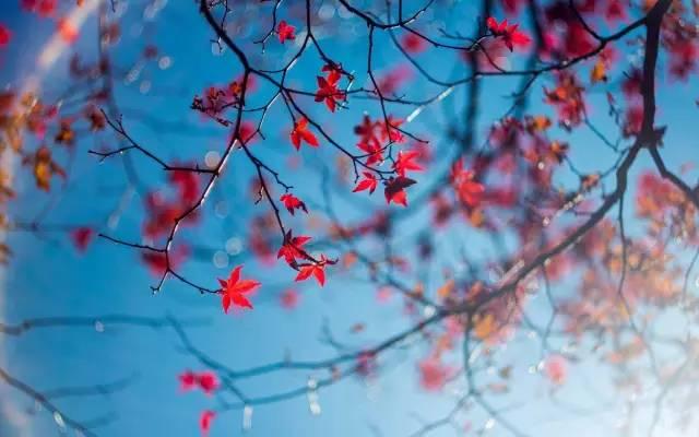 村上春树最经典的16句话,关于人生的那些领悟