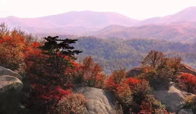 金秋大洪山层林尽染,迎来一年中最美的时刻,红叶黄叶遍布山野,各种色调五彩斑斓搭配恰到好处。各种色彩错杂其中,分外妖娆,构成了一幅震撼人心、惊艳绝伦的绚丽画卷,漫步其中,仿佛进入一个梦幻般的童话世界。 自驾线路:二广高速-麻安高速公路-S216-S333-长灵路-终点 6咸宁通山九宫山