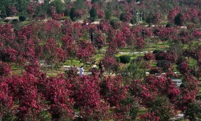 太和梅花谷風景區位于文峰鄉太和村境內,因千年太和觀和華中地區最大