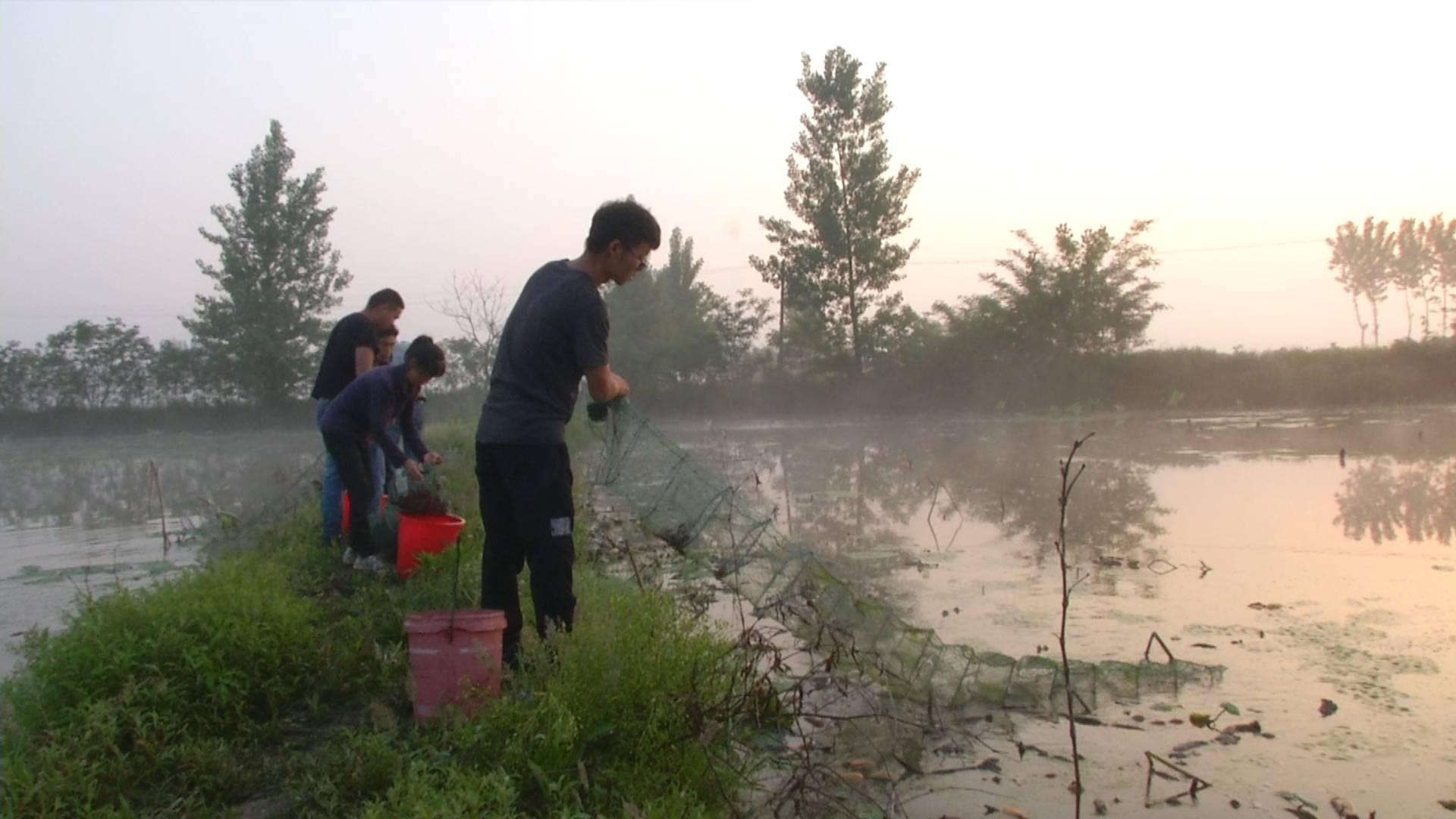 长江云报道 在很多外地人的印象当中,地处鄂北岗地的襄阳是一个缺水的地方,事实上,襄阳有很多大型水库,而依托大型水库的水资源来种植水稻、养殖鱼虾在这里并不稀奇,眼下这段时间,正是小龙虾上市的高峰期,虽然说上市量比前期增加了不少,可是小龙虾的价格依然不低,面对这样一个十分红火的市场,在襄阳市也有不少年轻人从过去的仅仅是吃虾子,到现在开始养虾子和卖虾子。 5月31日清晨5点,襄阳市襄州区黄集镇李楼村,26岁的范超和小伙伴们一起在莲藕田里收地笼起小龙虾。毕业于武汉职业技术学院的范超,于去年和亲戚朋友联合另外10
