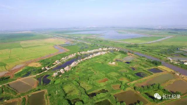 长江放壕,其实就是长江中下游特别是江汉平原一种传统而古老的捕鱼