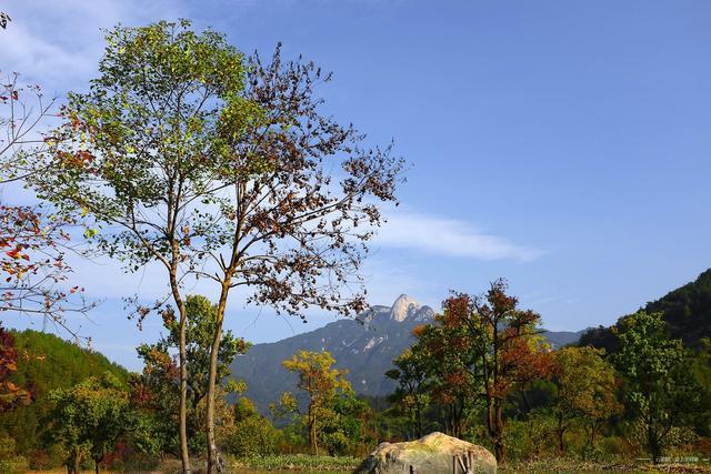 湖北圣人堂村,喜欢欣赏红叶就赶紧来吧,这里有比红叶更红的