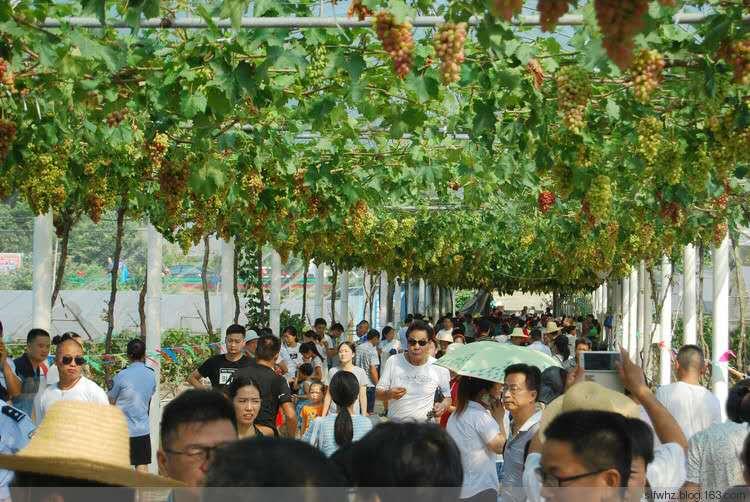三里畈镇成功举办第四届葡萄采摘节