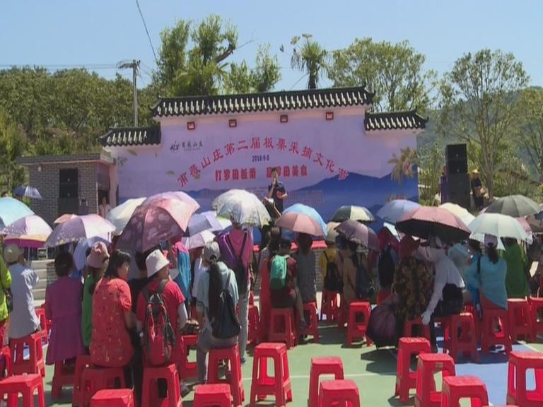 甫薇山庄举行第二届板栗采摘文化节