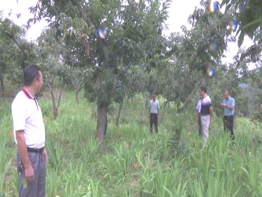 罗田县林业局开展板栗低产林改造技术指导