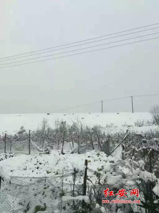 今冬第一場雪