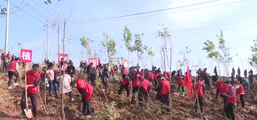 ?房县开展全民义务植树活动 共建绿色家园