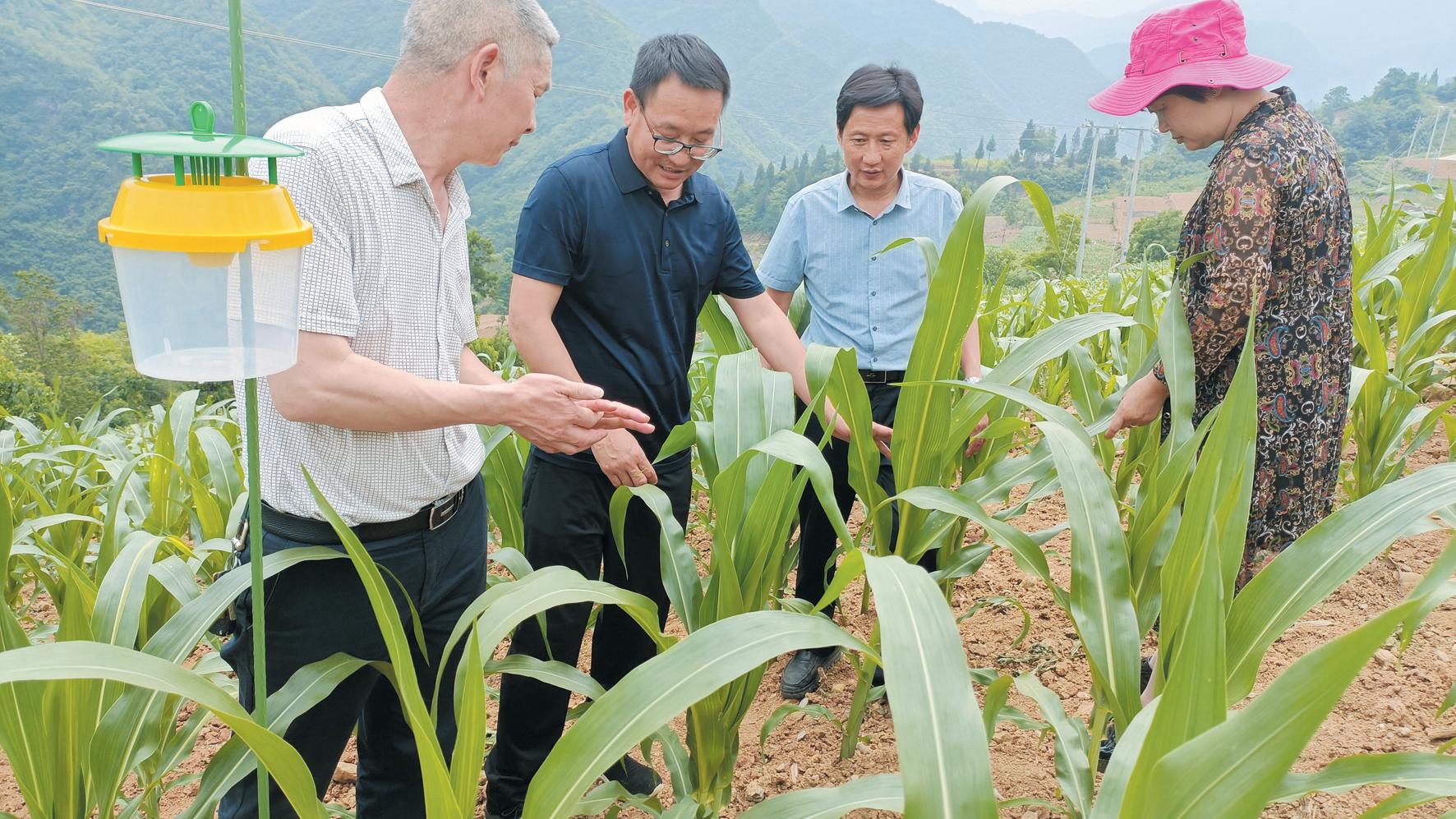房县:科学防控农作物害虫