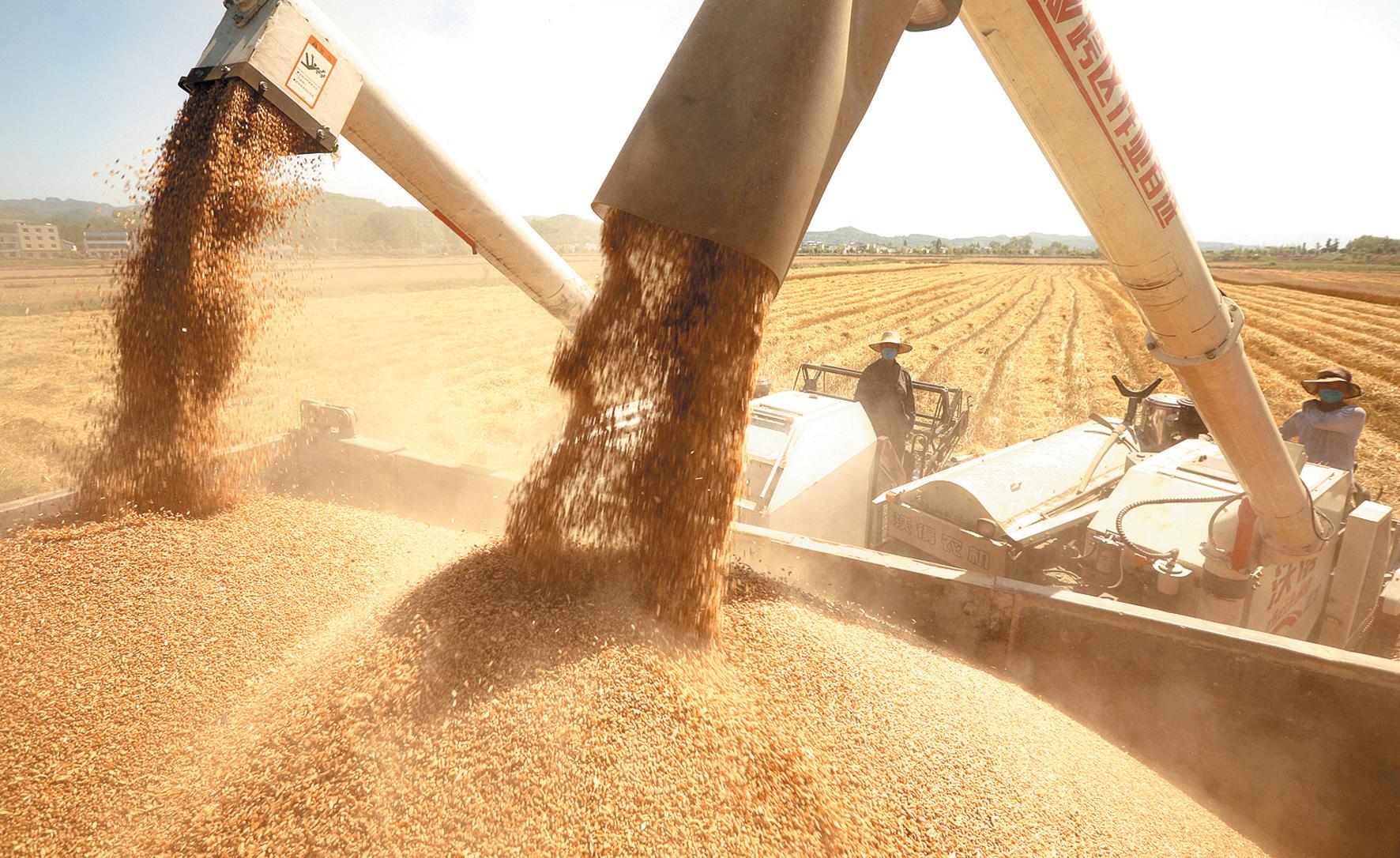 夏季粮油喜获丰收