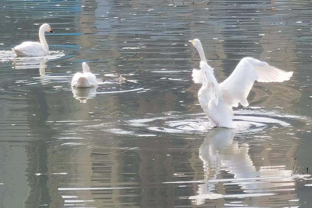 河岸青青 水鸟翩翩