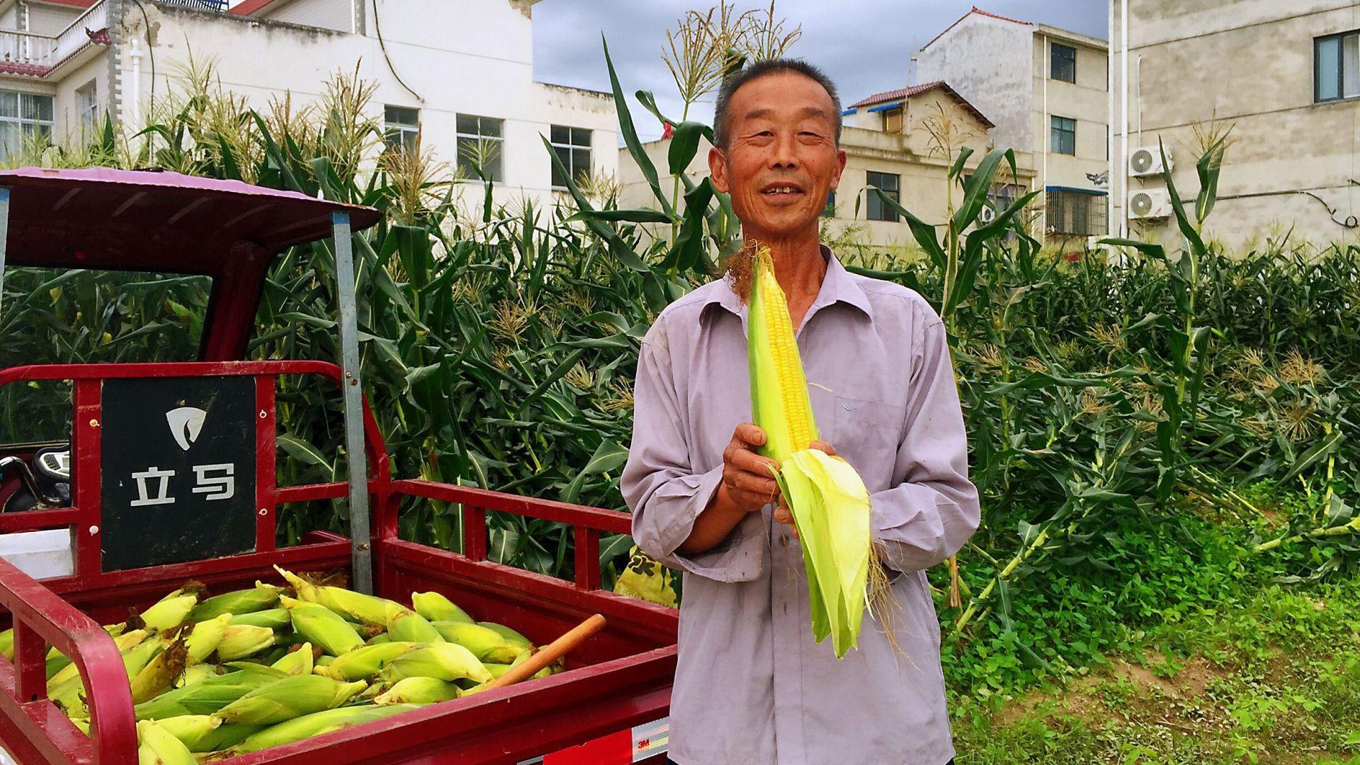 《记者走基层》红塔镇六谷村:丰收时节农户忙