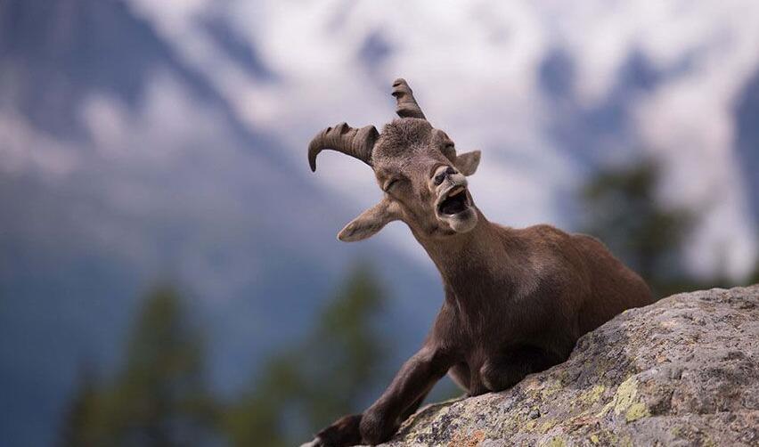 们对于野生动物的保护意识