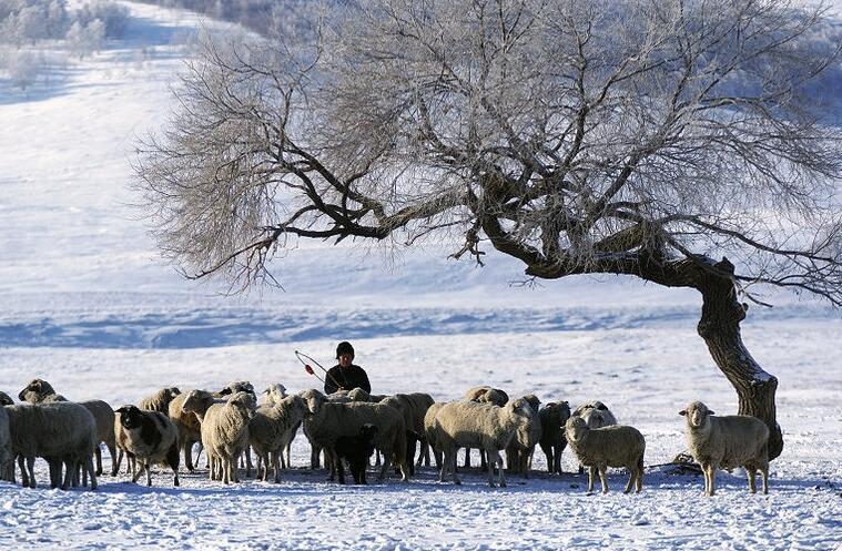冬天的童话 塞罕坝草原皑皑白雪