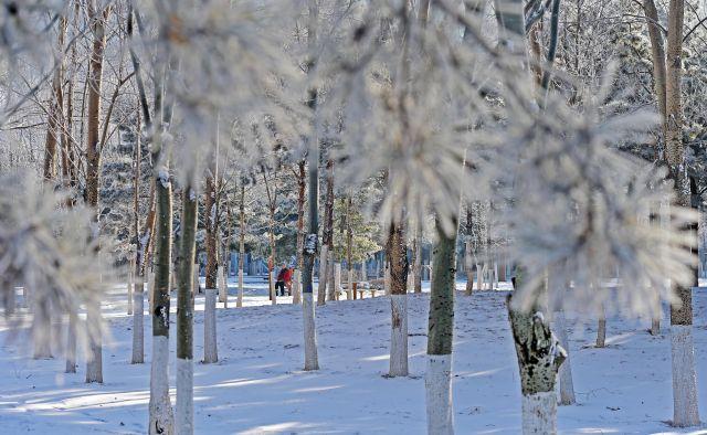 玉树琼花雾凇美 雪景还得看东北