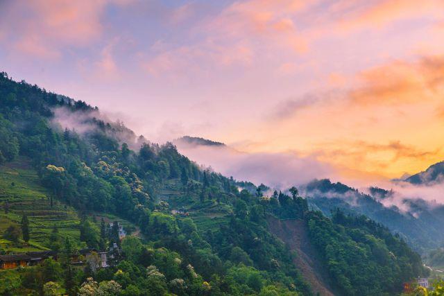 鶴峰 | 中營尋茶之旅