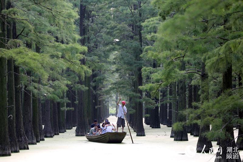 漲渡湖濕地:水上森林風景如畫
