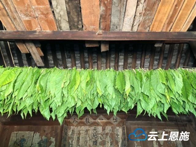 邓家沟村的夏天:与大自然来个约会