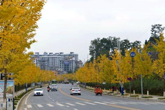 """行道树披上""""黄金甲"""" 咸丰县城系上""""金腰带"""""""