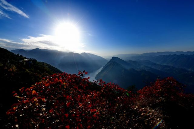 秋风又红长江岸 看三峡红叶 色彩斑斓