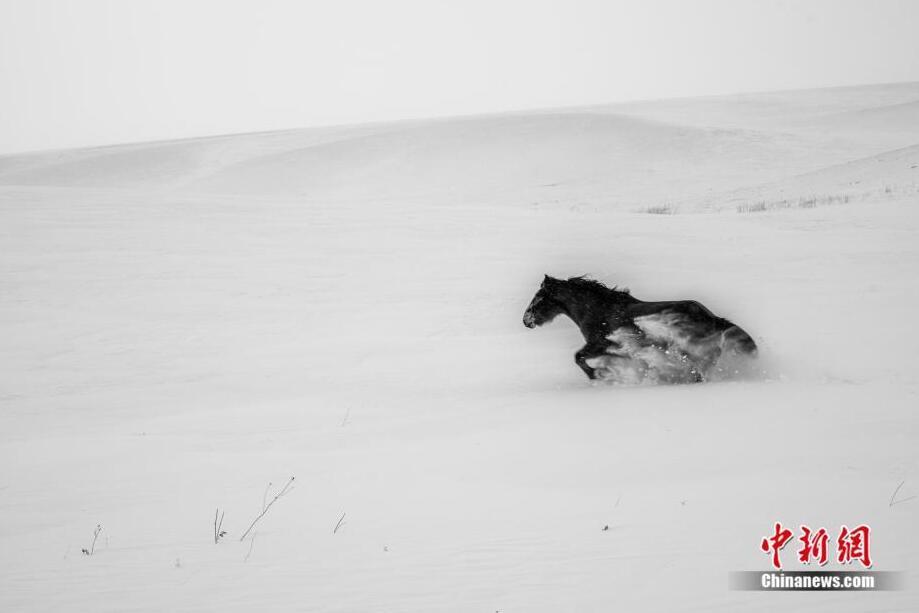 草原精灵 风雪中的蒙古马