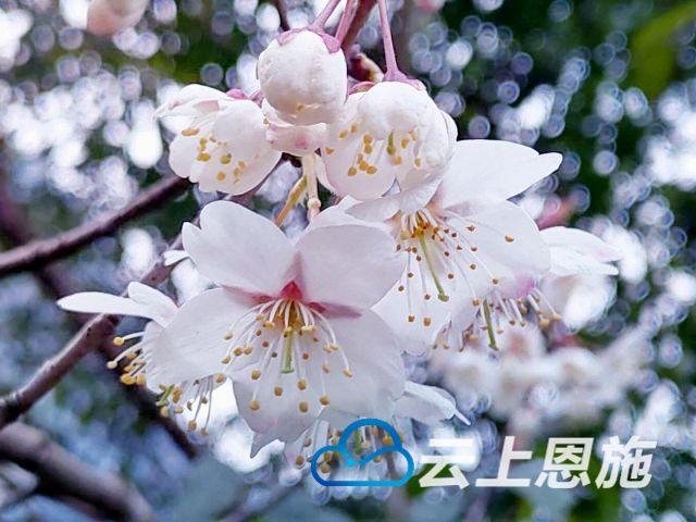 鹤峰: 行走的风景 又到山花烂漫时