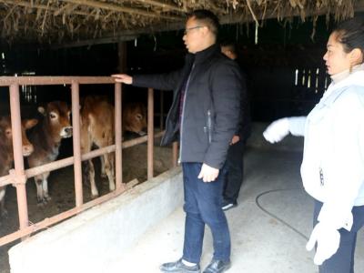 竹坪乡:发展养殖 助农致富