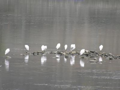 竹山堵河变身鸟类乐园