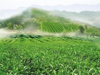 產業扶貧助力貧困農民增收的思考