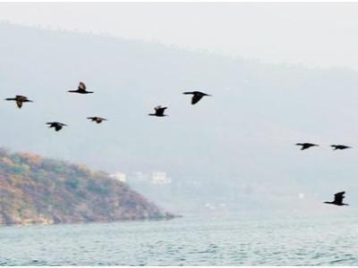 绿植修复,竹山圣水湖湿地成候鸟天堂