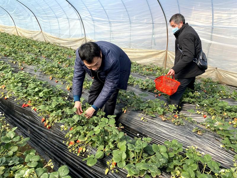 县农业综合执法大队开展农产品质量安全检查