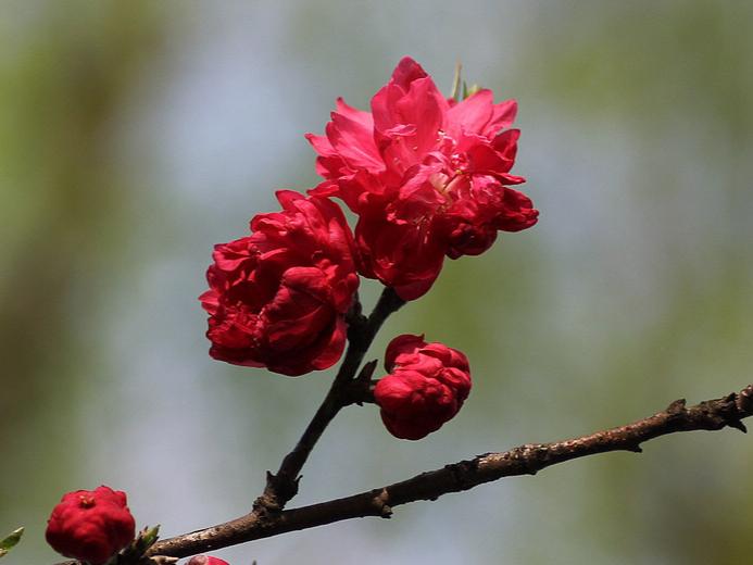 春      花