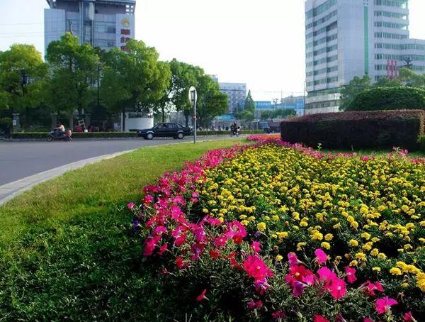 荆州城区公园广场更换6万盆花草 市民将在花海中过双节