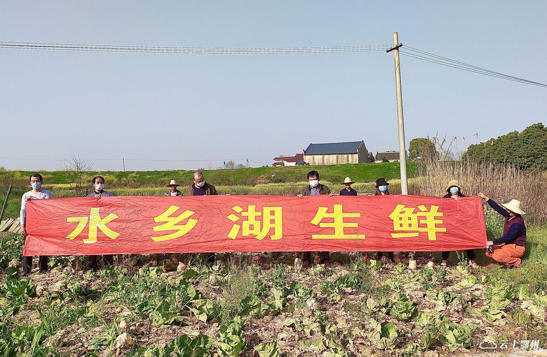 鄂州日报:点赞水乡湖电商发展(图1)