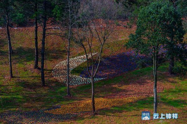 万紫千红植物园2013年前为公司苗圃基地,2013年,根据园区良好的地理、生态环境,开始进行旅游开发建设。2015年底,已初步建成紫薇、桂花、樱花、茶花、对接百腊等植物专类园,栽植各类苗木近120万株;建成25公里主干道路沙石路基,硬化水泥路面15公里,刷黑4.5公里,园区水电路基础设施基本配套;建成游客接待中心、生态停车场、紫薇广场、水上舞台、观景餐厅、马厩酒店、职工宿舍等服务设施以及景园、文化墙、观景台等旅游景观设施。今年,围绕旅游配套,重点进行康体游玩等娱乐设施建设。目前,正在建设的娱乐项目有:汽