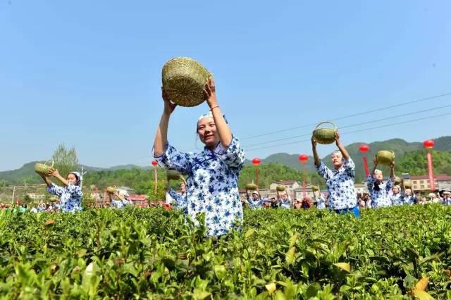保康县首届茶文化旅游节隆重开幕 万人涌进格栏坪观光游玩采茶品茗
