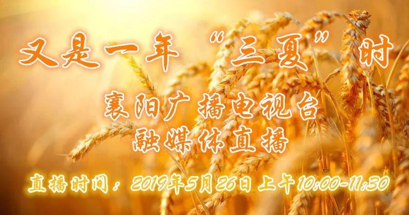 """围观!襄阳570万亩小麦熟了!大型""""收割现场""""城里娃谁见过?"""