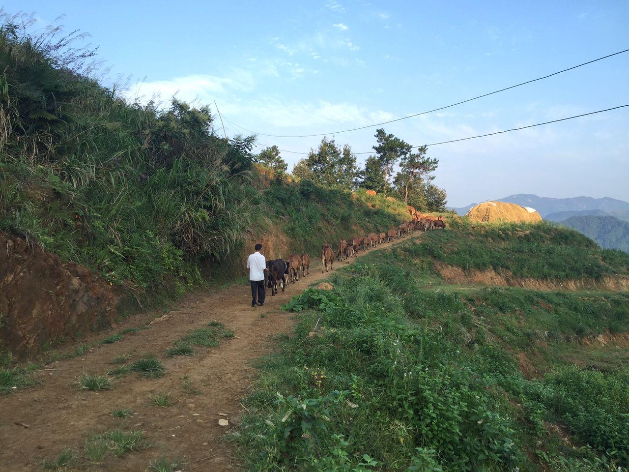 人生,就是一条回家的路 —记向桥乡创意总监陈卓彬回乡创