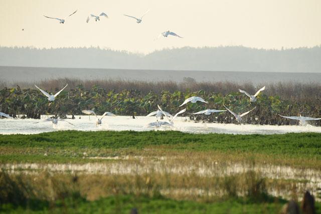 美图|东港湖——候鸟的天堂